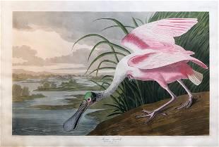 Audubon Aquatint Engraving, Roseate Spoonbill