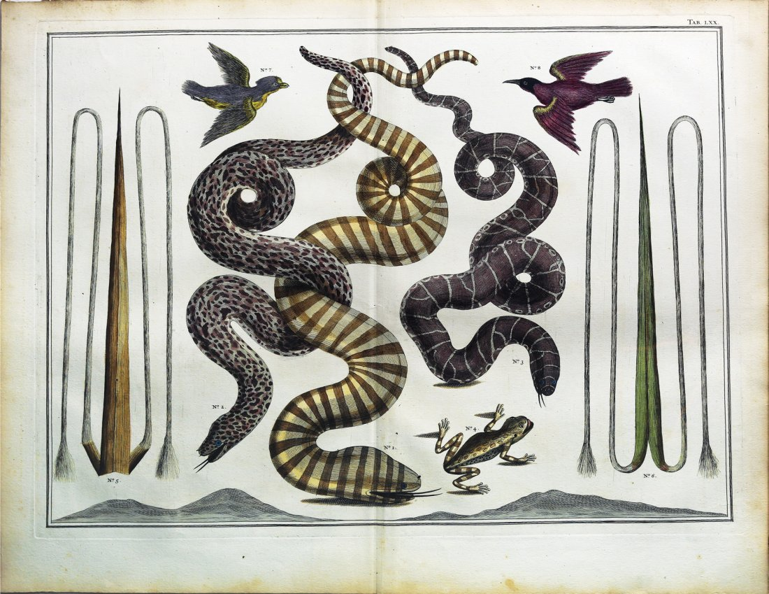 Engaging and exotic engravings by Albert Seba