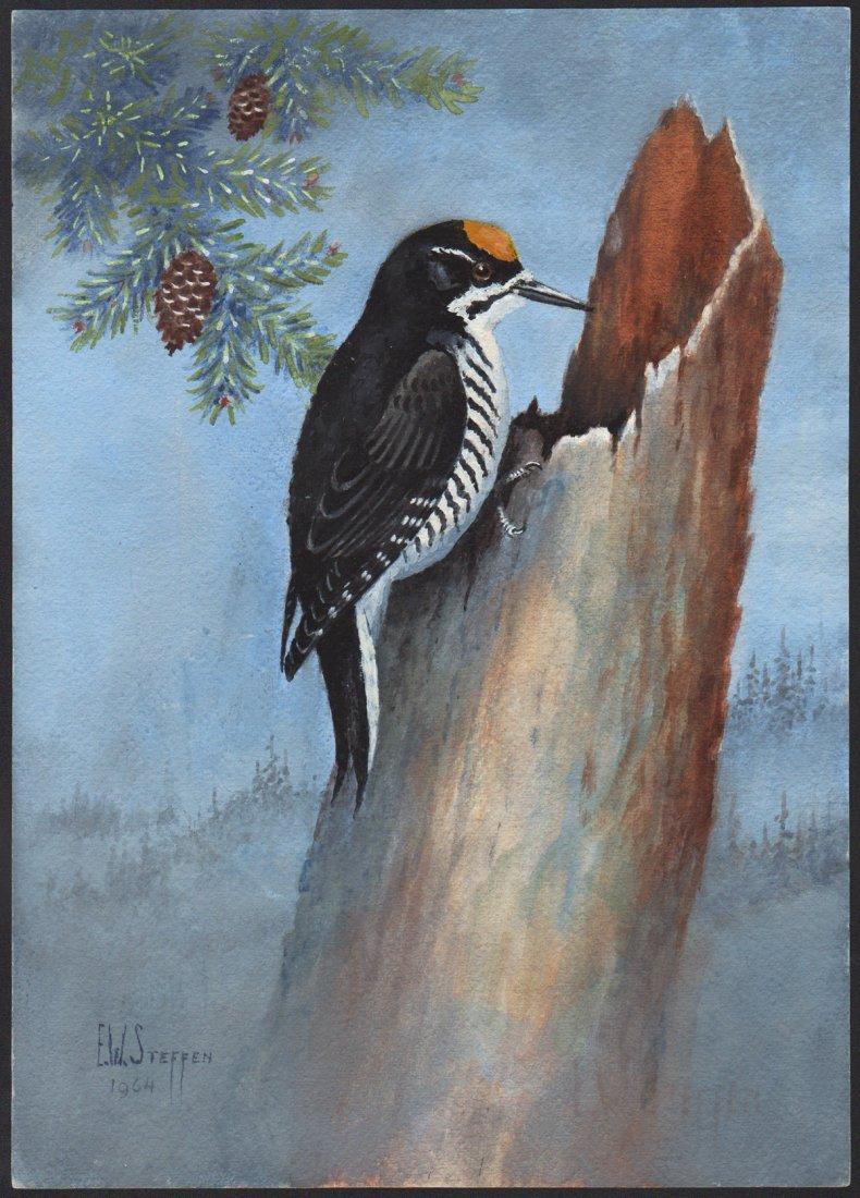 Steffen Watercolor of Black-Backed Arctic Woodpecker