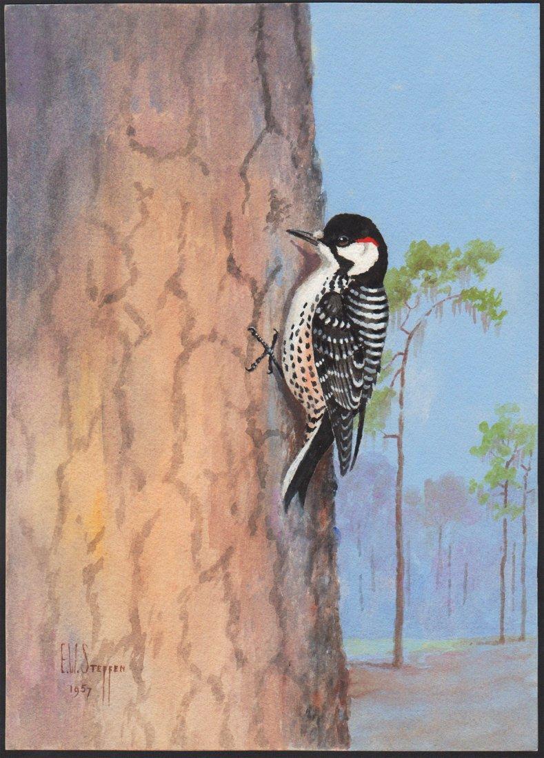 Steffen Watercolor of Red-Cockaded Woodpecker