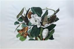 Audubon Aquatint Engraving, Black-Billed Cuckoo