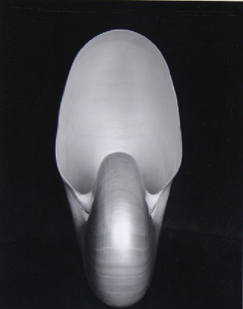 101: Edward Weston, (American, 1886-1958), Shell, 1927