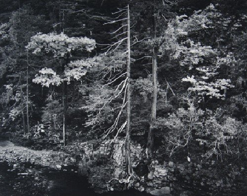 106: Ansel Adams, (American, 1902-1984), Forest and Str