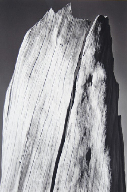109: Ansel Adams, (American, 1902-1984), White Stump, S