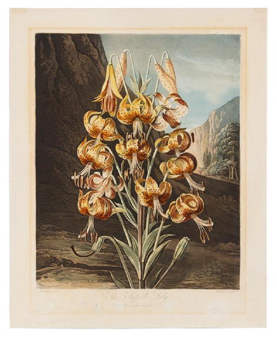 [BOTANICAL]. Thornton, Robert (1768-1837)