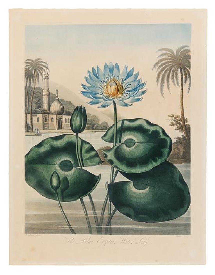 [BOTANICAL]. Thornton, Robert (1768-1837)