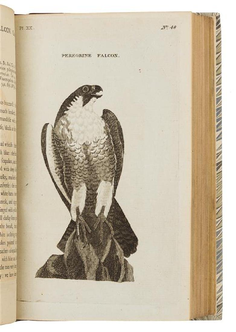 PENNANT, Thomas (1726-1798).
