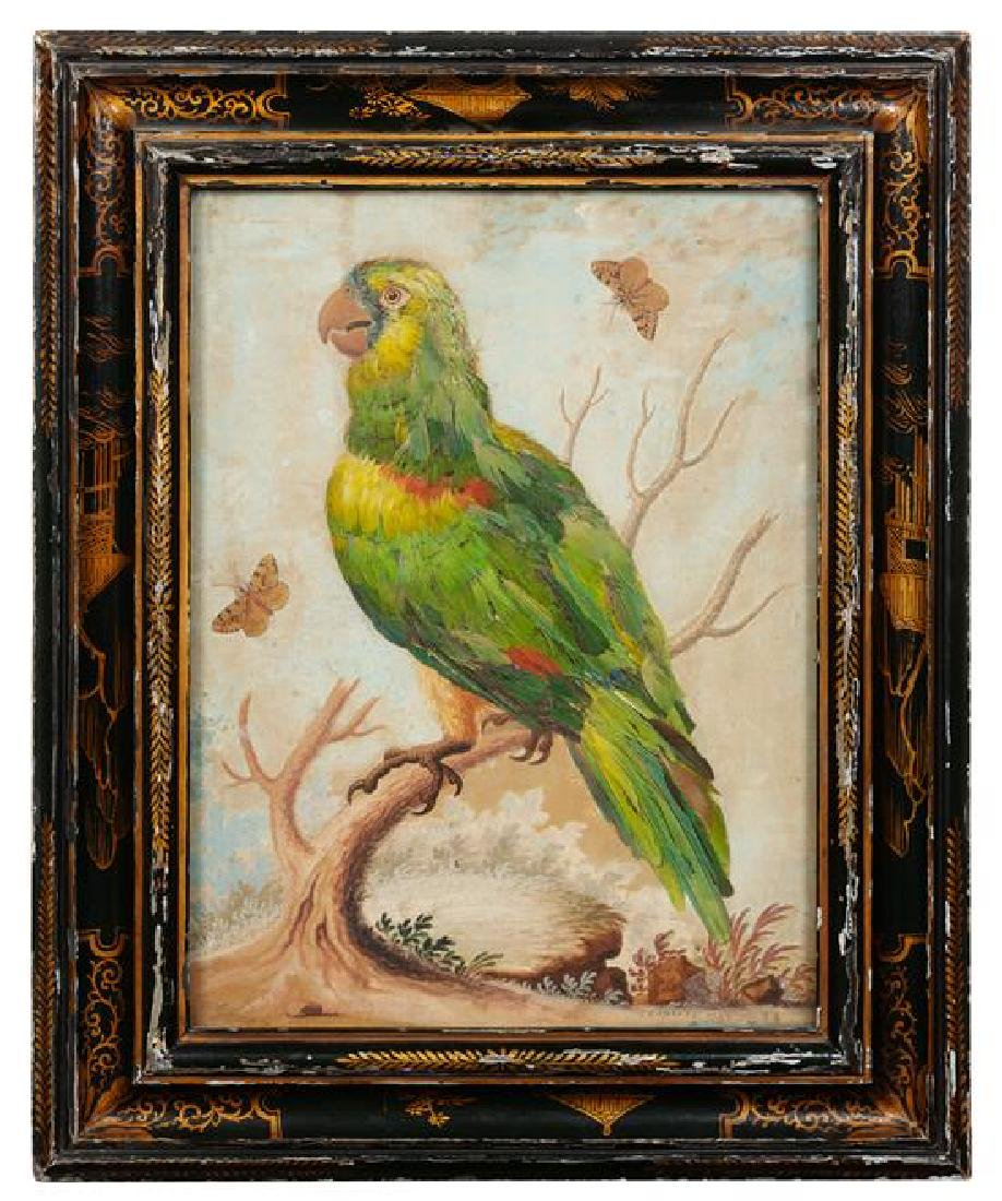 * G. Edvards, (18th century), Parrot on Branch with