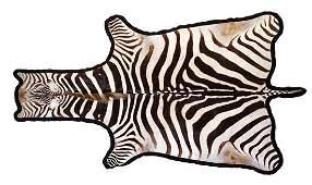 A Taxidermy Zebra Rug
