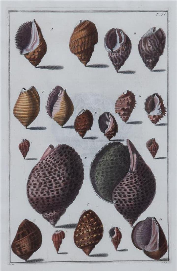 A Set of Four Italian Hand-Colored Shell Engravings