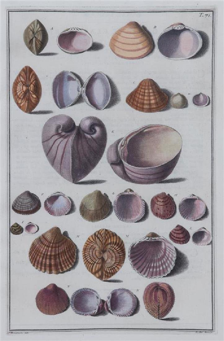 A Set of Four Italian Hand-Colored Shell Engravings - 2