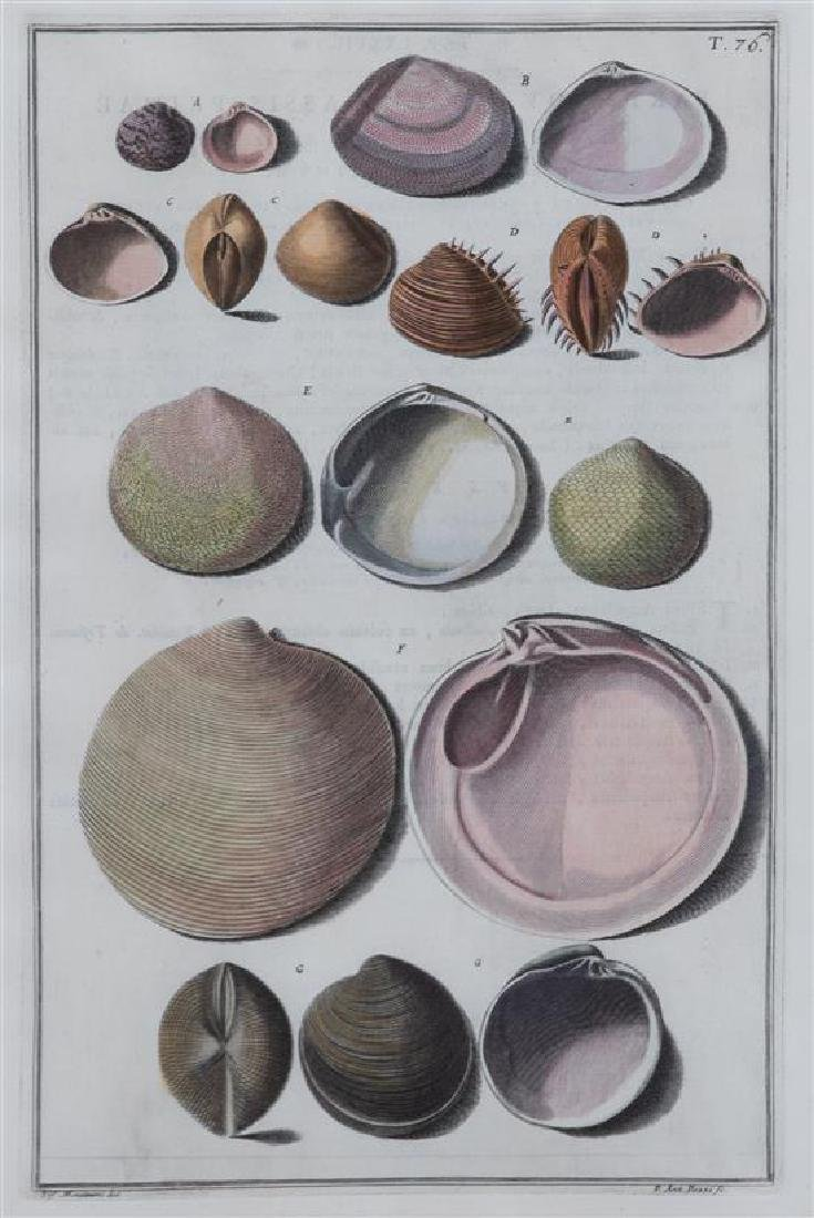 A Set of Four Italian Hand-Colored Shell Engravings - 3