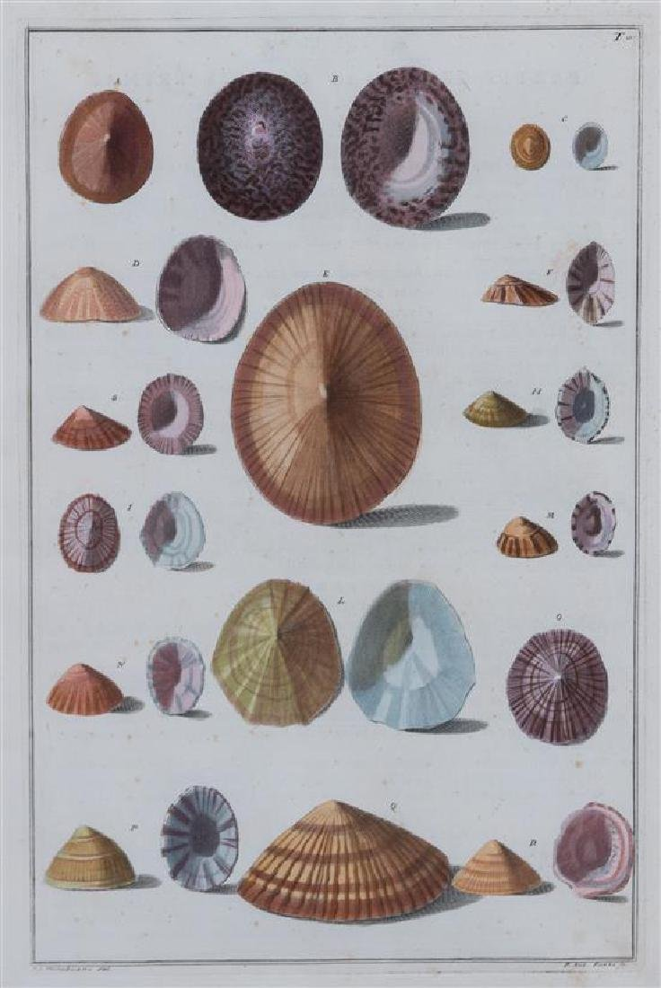 A Set of Four Italian Hand-Colored Shell Engravings - 4