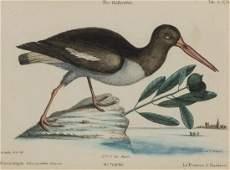 A Set of Four Bird Prints