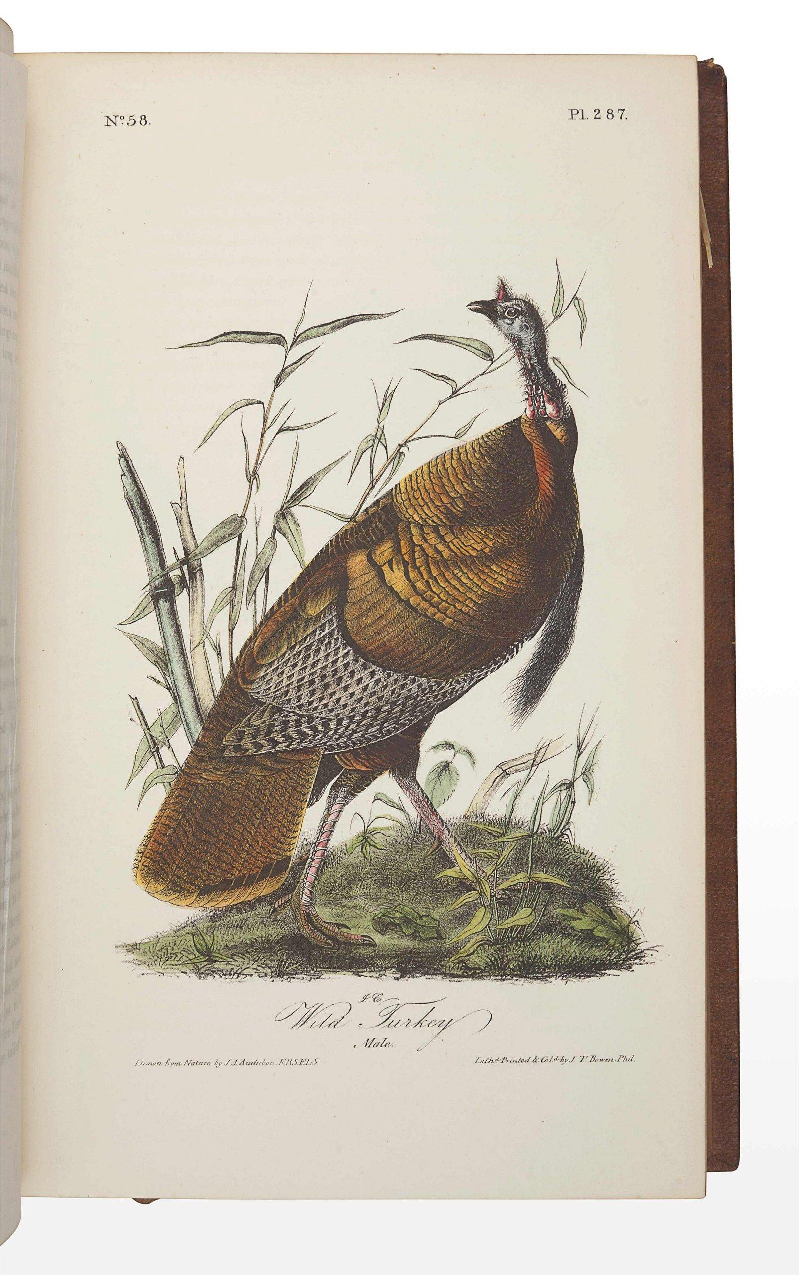 AUDUBON, John James (1785-1851). The Birds of America,