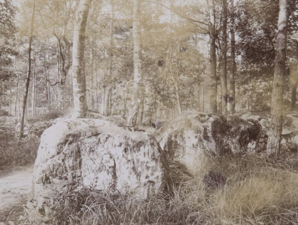 Eugene Atget, (French, 1857-1927), Fountainebleau