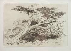 George Elbert Burr American 18591939 Tree