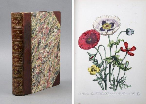 9: (BOTANY) LOUDON, JANE WEBB. British Wild Flowers. Lo