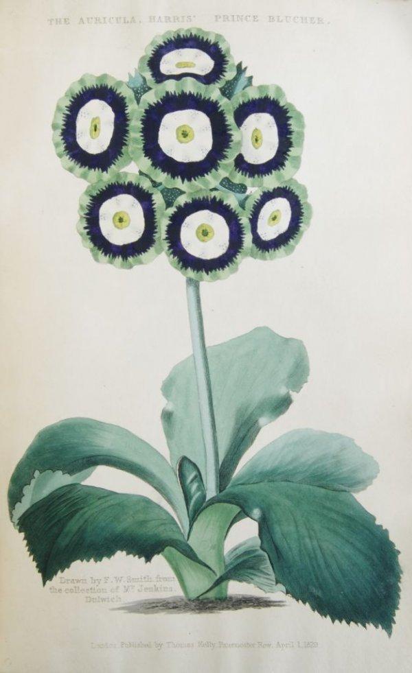 10: (BOTANY) MCINTOSH, CHARLES. The Practical Gardener