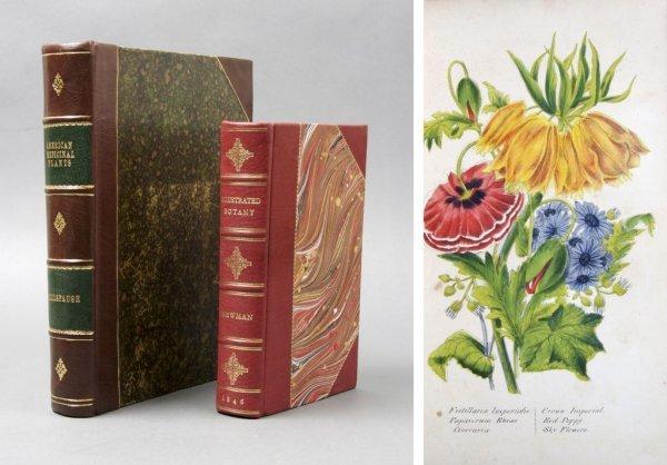 13: (BOTANY) A group of 2 vols.