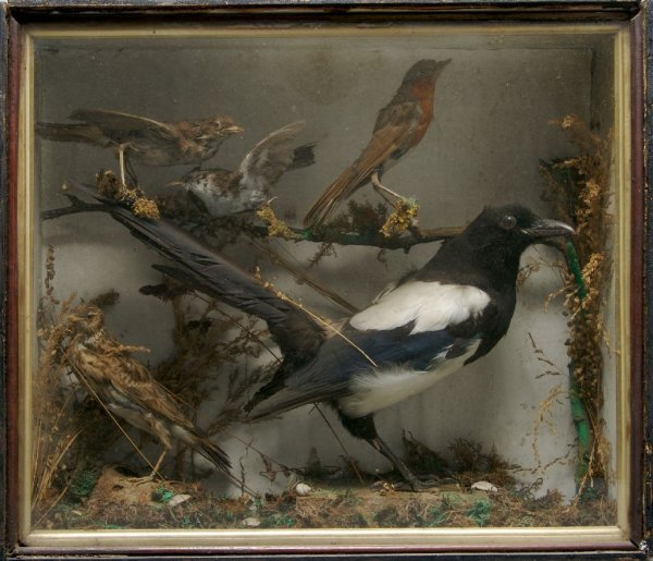 An English Taxidermied Ornithological Diorama, Height 1