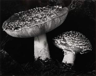 Edward Weston (American, 1886-1958) Toadstool, 1932