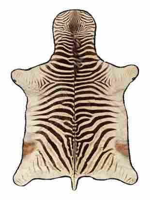 A Taxidermy Zebra Rug