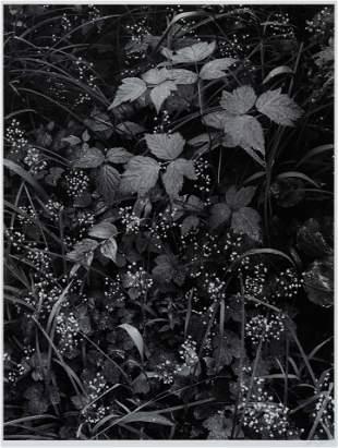 Ansel Adams (American, 1902-1984) Trailside, Near