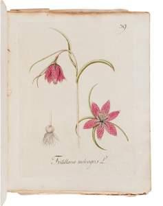 KERNER, Johann Simon (1755-1830). Abbildung Aller