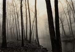 Paul Caponigro (American, b. 1932) Redding Woods,