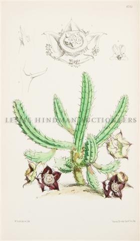 4: CURTIS, WILLIAM. The Botanical Magazine. London, 187