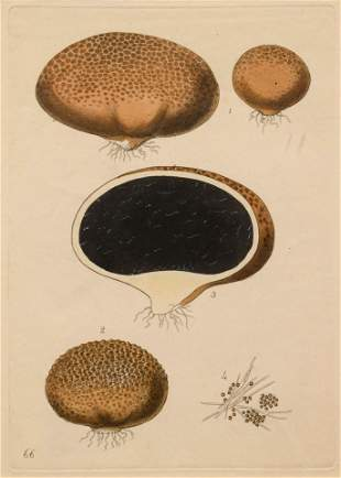 Five German Hand-Colored Engravings of Various Fungi