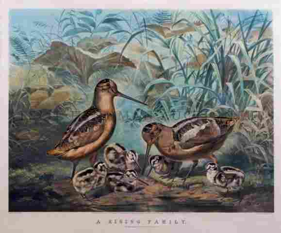 1144: Currier & Ives, (Nathaniel Currier (1813?1888) an