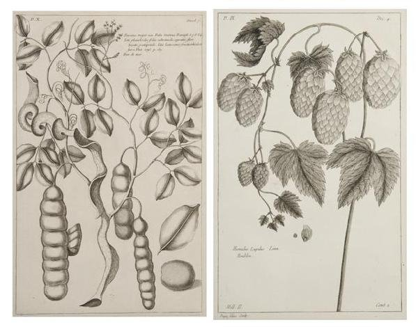 16: BUCHOZ, PIERRE JOSEPH. 8 engraved prints from Histo