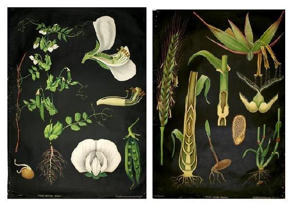 17A: DENOYER-GEPPERT. 4 linen-backed color botanical po