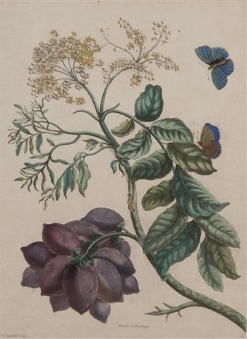 16: A Set of Nine Watercolor Botanical Prints