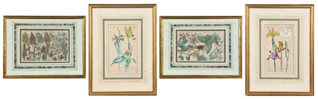 14: A Group of Four Handcolored Botanical Prints, Heigh