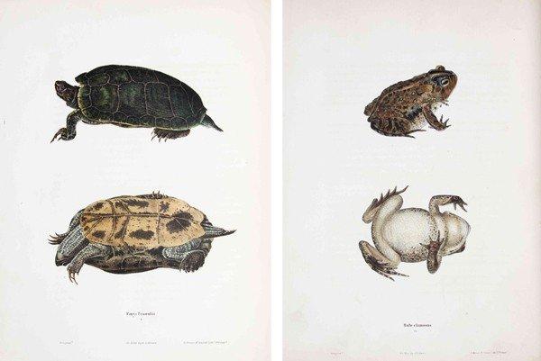 1: HOLBROOK, JOHN EDWARDS. North American Herpetology.