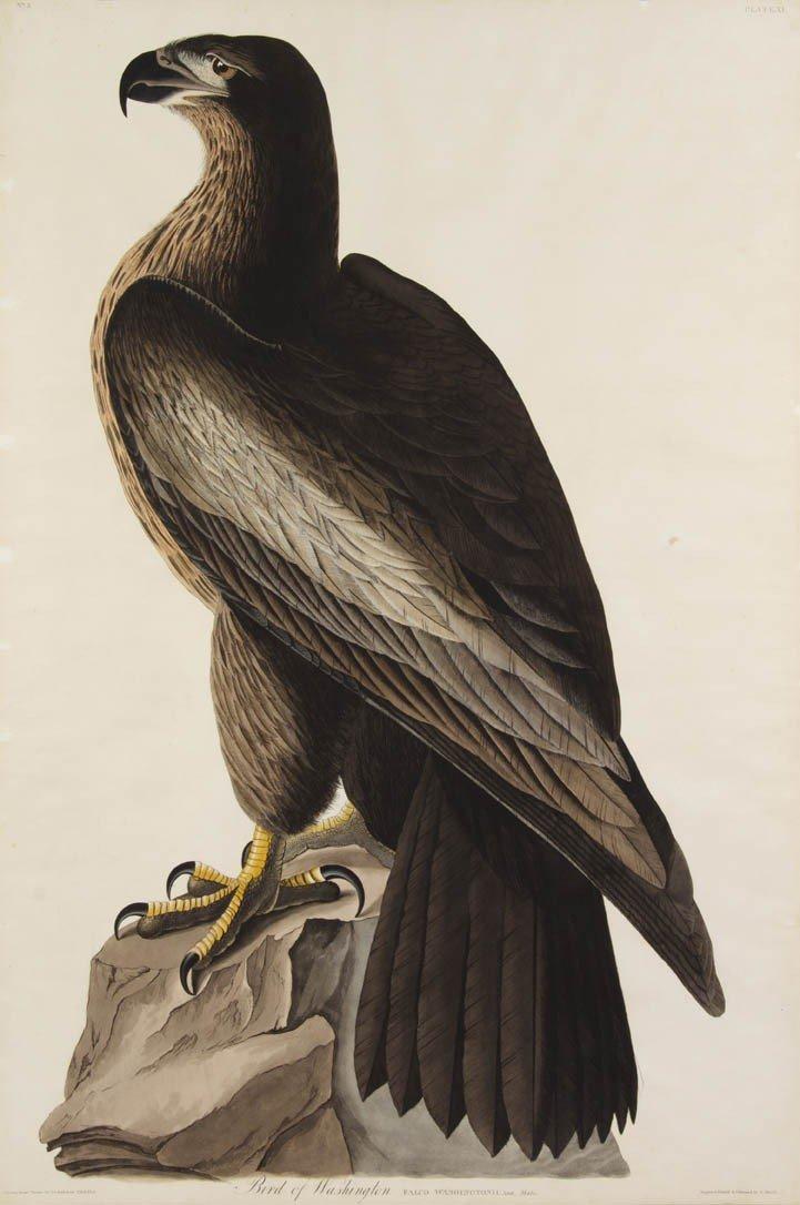 109: (AUDUBON, JOHN JAMES, after) HAVELL, ROBERT. Bird