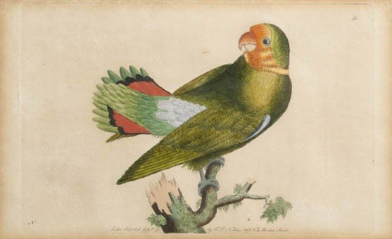 21: Six Handcolored Engravings, Height 4 3/4 x width 7