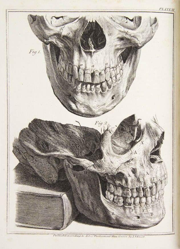 HUNTER, JOHN. The Natural History of the Human Tee
