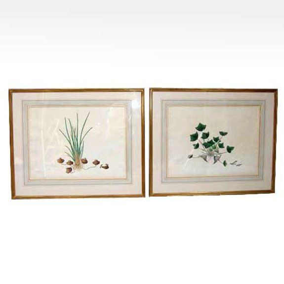 566: A Pair of Watercolor Botanical Paintings,  Height