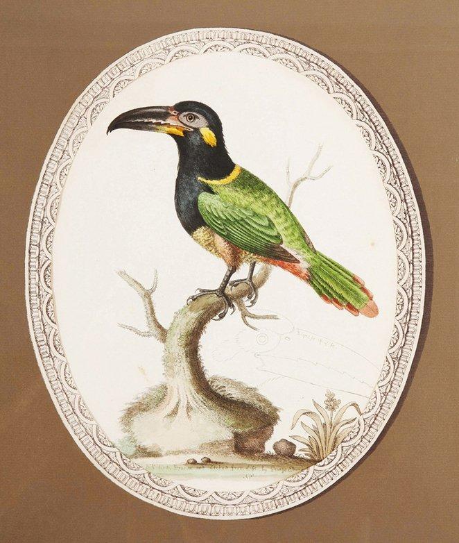 7: A Set of Three Ornithological Prints, after George E