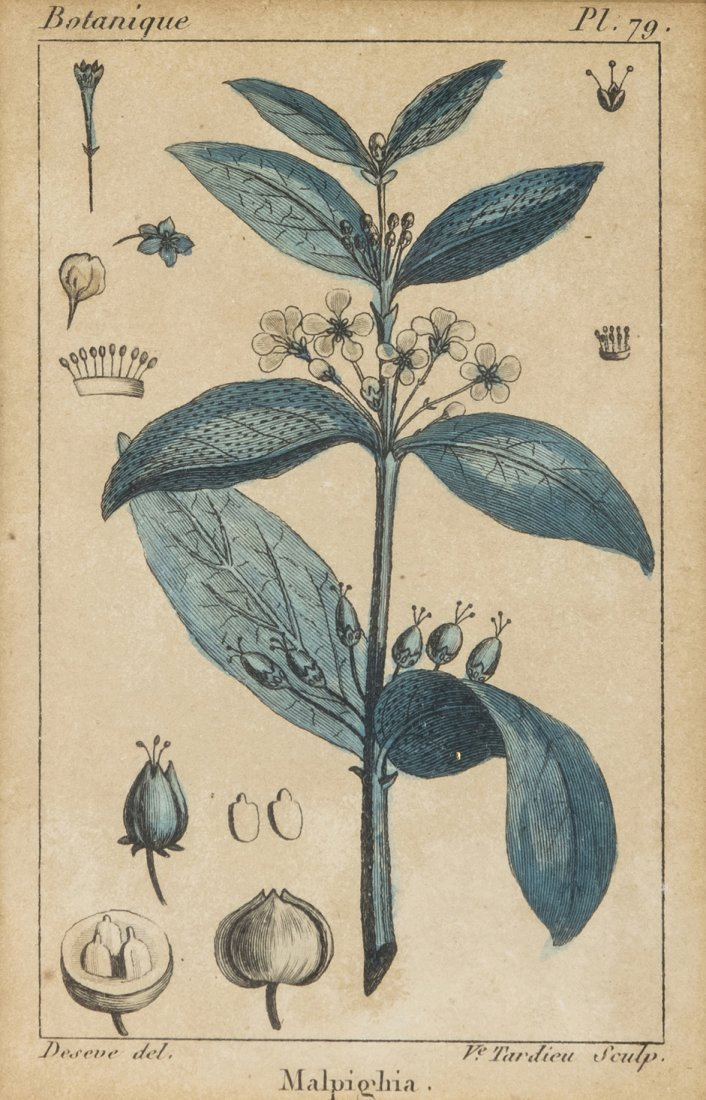 A Collection of Five Framed Conchological and Botanical