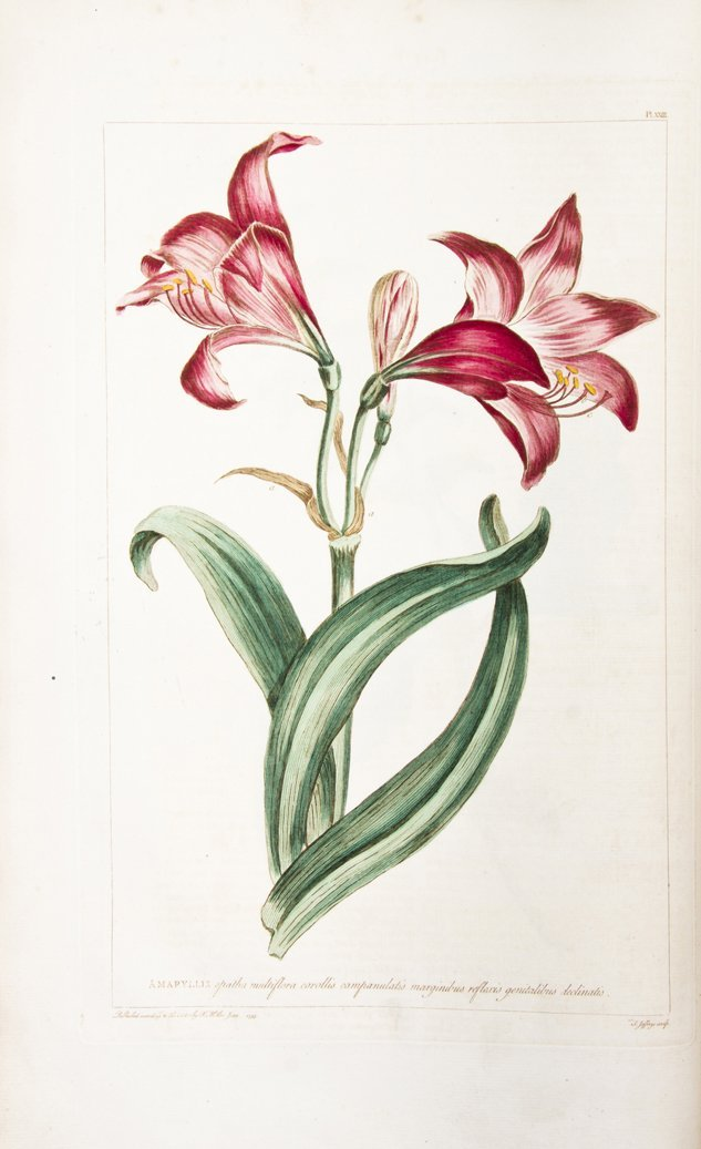 (BOTANY) MILLER, PHILIP. Figures of the Most Beautiful,