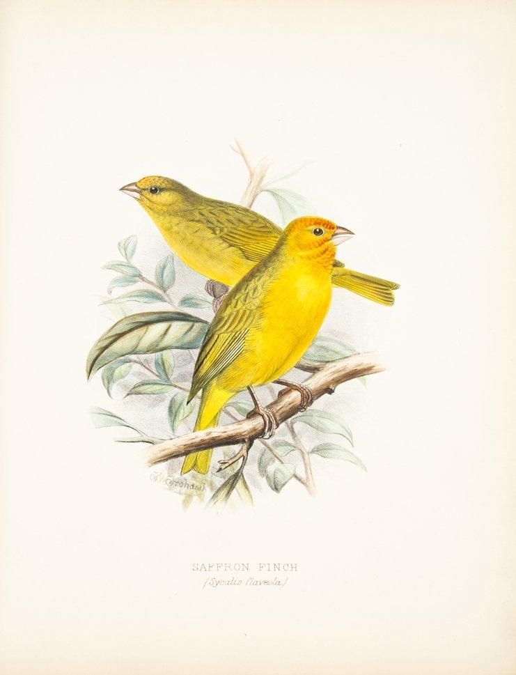 BUTLER, ARTHUR G. Foreign Finches in Captivity. London,