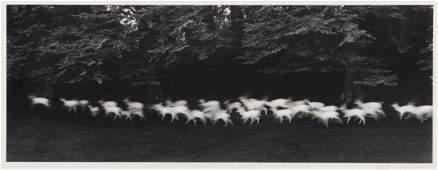 Paul Caponigro, (American, b. 1932), Running White