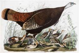 John James Audubon, (American, 1785-1851), Great