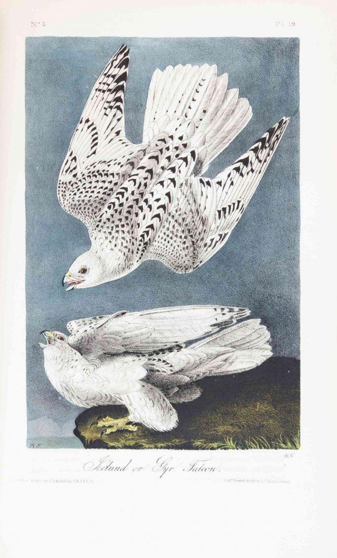 AUDUBON, JOHN JAMES. The Birds of America, from