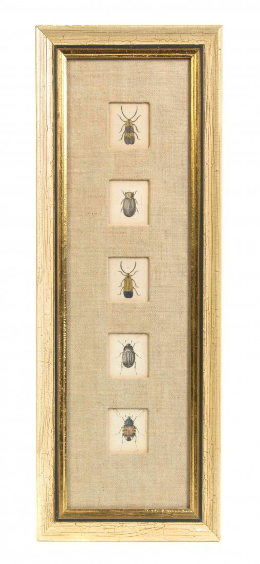 A Set of Ten Handcolored Entomological Engravings,